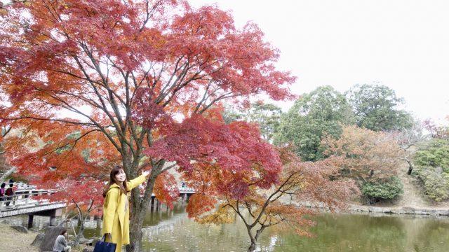 奈良公園 浮見堂 紅葉